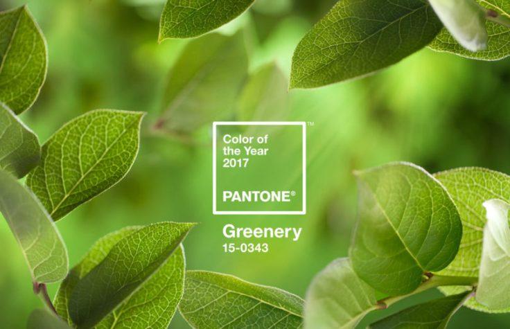pantone_coy_2017_heroshot-rgb-810x523